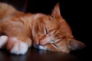 You need sleep to be productive