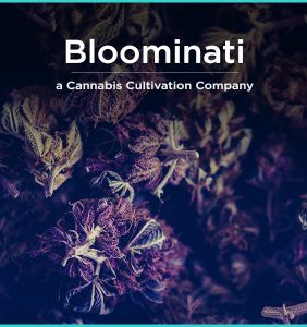 Banner_Visual_Name_I_43_bloominati