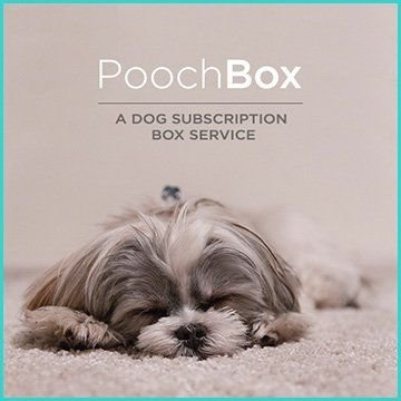 Name For a Dog Subscription Box Service