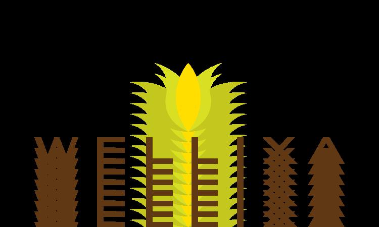 Wellixa.com